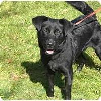 Adopt A Pet :: Leon - Rigaud, QC