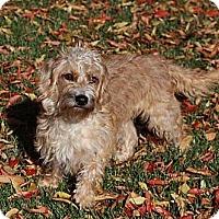 Adopt A Pet :: Cookie - San Jose, CA