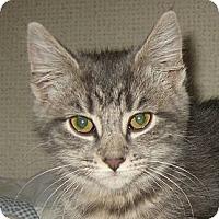 Adopt A Pet :: AUTUMN - 2013 - Hamilton, NJ