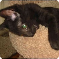 Adopt A Pet :: Sissy - Syracuse, NY