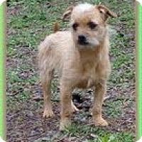 Adopt A Pet :: Trina and Trixie - Staunton, VA