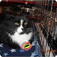 Adopt A Pet :: Puffen - Riverside, RI