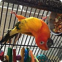 Adopt A Pet :: Adrian - Punta Gorda, FL