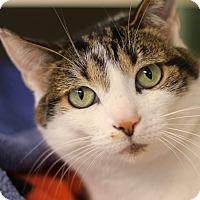 Adopt A Pet :: Elana - Chicago, IL