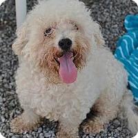 Adopt A Pet :: Marcel - Athens, GA