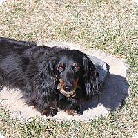 Adopt A Pet :: Ricky - Louisville, CO