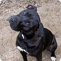 Adopt A Pet :: Naomi - Ravenel, SC