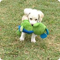 Adopt A Pet :: Audio - San Antonio, TX