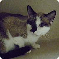 Adopt A Pet :: Milan - Hamburg, NY