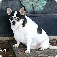 Adopt A Pet :: Star - Tucson, AZ