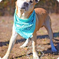 Adopt A Pet :: Sam - Fort Valley, GA
