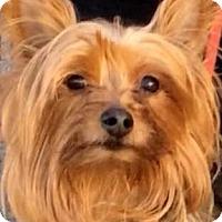 Adopt A Pet :: PRAIRIE (video) - Los Angeles, CA