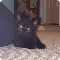 Adopt A Pet :: Ana - Jackson, MS