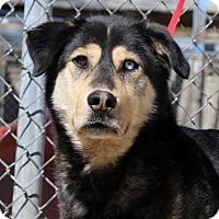 Adopt A Pet :: Marshall - Salt Lake City, UT