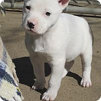 Adopt A Pet :: VELMA - Lincolndale, NY