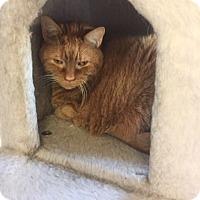 Adopt A Pet :: Cheech - Acushnet, MA