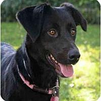 Adopt A Pet :: Snips - Seattle, WA