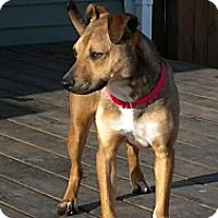 Adopt A Pet :: Teddy - Hastings, NY