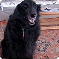 Adopt A Pet :: Doja - Denver, CO