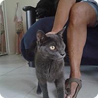 Adopt A Pet :: Jill - Deerfield Beach, FL