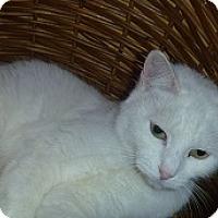 Adopt A Pet :: Mary - Hamburg, NY
