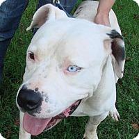 Adopt A Pet :: Amos - Erwin, TN