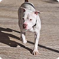 Adopt A Pet :: Titus - Sierra Vista, AZ