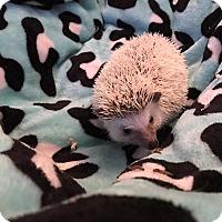 Adopt A Pet :: Rufio - Grand Rapids, MI