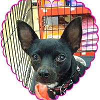 Adopt A Pet :: Lillian - Las Vegas, NV