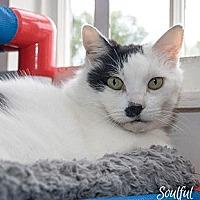 Adopt A Pet :: Charlie - Oakland, CA