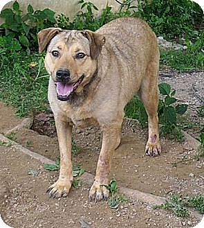 Shepherd (Unknown Type) Mix Dog for adoption in Poland, Indiana - Cherie