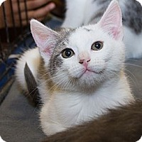 Adopt A Pet :: Molly - Irvine, CA