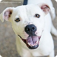 Adopt A Pet :: Blanc - Atlanta, GA