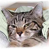 Adopt A Pet :: Sarah - Montgomery, IL
