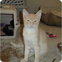 Adopt A Pet :: Hermione - Scottsdale, AZ