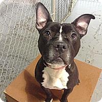 Adopt A Pet :: COURTESY POST: Salem - Chicago, IL