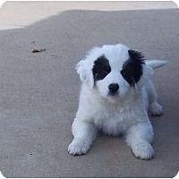 Adopt A Pet :: Macey - Adamsville, TN