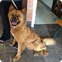 Adopt A Pet :: Pippi - Tillsonburg, ON