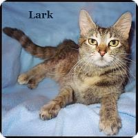 Adopt A Pet :: Lark - Bentonville, AR