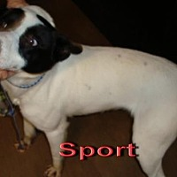 Adopt A Pet :: Sport - Coleman, TX