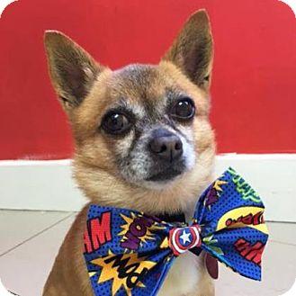 Chihuahua Mix Dog for adoption in Philadelphia, Pennsylvania - Mario