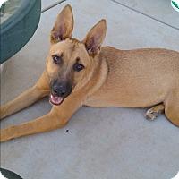 Adopt A Pet :: Bashi - Creston, CA