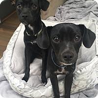 Adopt A Pet :: Butch & Sundance - Encino, CA
