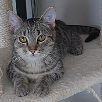 Adopt A Pet :: Emmy - Manning, SC