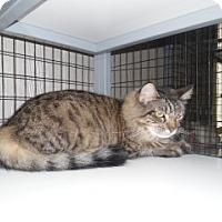 Adopt A Pet :: Tabitha - Clarksville, AR