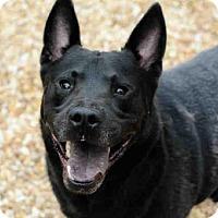Adopt A Pet :: RAFAEL - Jacksonville, FL
