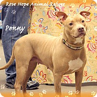 Adopt A Pet :: Penny - Waterbury, CT