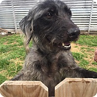 Adopt A Pet :: Wednesday - Joplin, MO