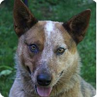 Adopt A Pet :: OSO - Red Bluff, CA