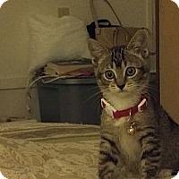 Adopt A Pet :: Abbie - Morgan Hill, CA